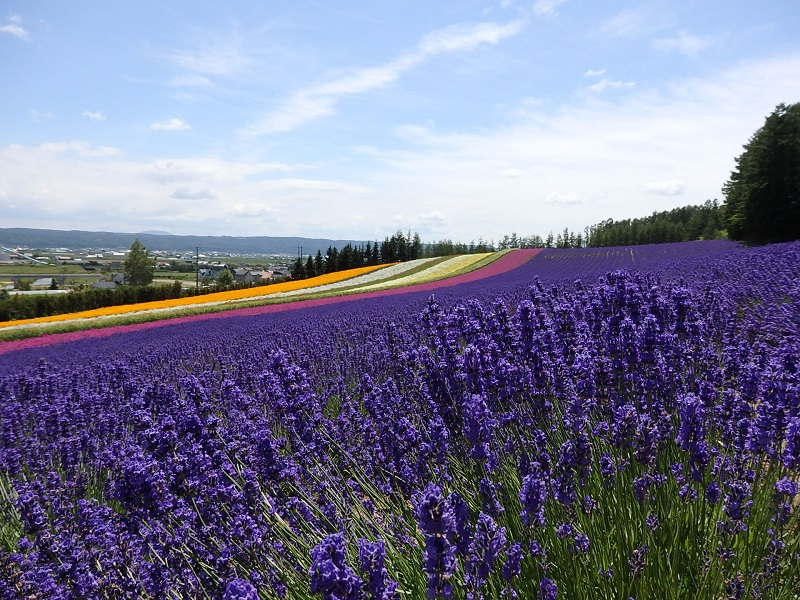 Lavender Tour And Travel