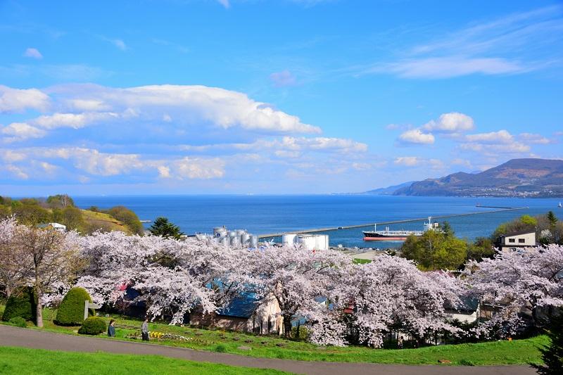 Japan Sakura Park